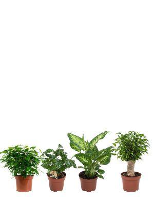 Diverse plantenmix