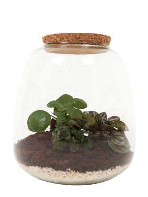 Ecosysteem - Pilea, Sedum & Peperomia