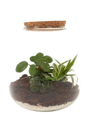 Ecosysteem - Pilea, Graslelie & Sedum