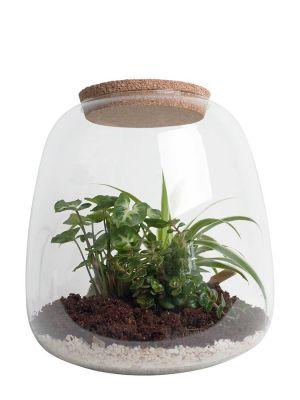 Ecosysteem - Syngonium, Sedum & Graslelie