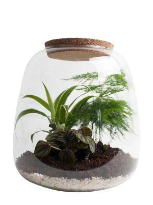 Ecosysteem - Asparagus, Spider plant & Peperomia