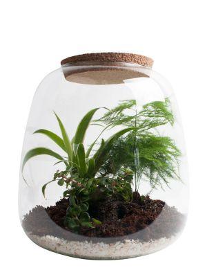 Ecosysteem - Asparagus, Spider plant & Sedum