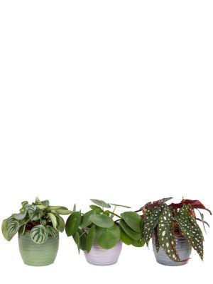 Popular plant mix